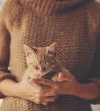 Котенок спать на руках Стоковая Фотография