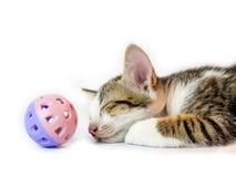 Котенок спать с шариком Стоковое Изображение RF