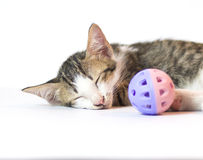 Котенок спать с шариком Стоковая Фотография