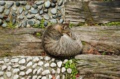 Котенок спать Стоковые Изображения RF