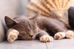 Котенок спать Стоковые Изображения