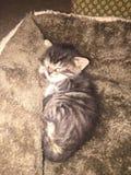 Котенок спать Стоковые Фотографии RF