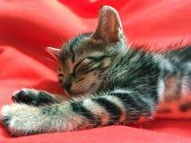 Котенок спать стоковое фото