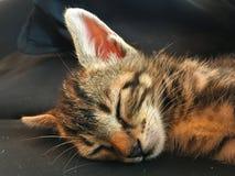 Котенок спать стоковое изображение