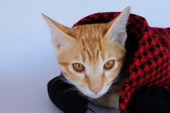 Котенок Сторона кота Стоковая Фотография RF