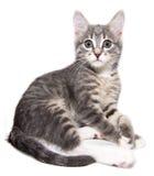 Котенок счастливый Стоковое Изображение