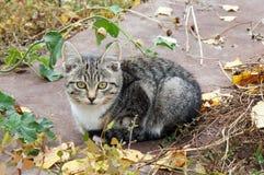 Котенок с желтыми глазами! Стоковое Изображение RF