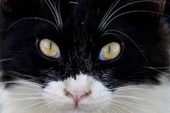 Котенок с зелеными глазами представляет к камере стоковая фотография