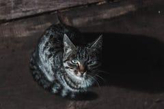 Котенок с испещрянной расцветкой на черной предпосылке стоковое фото rf