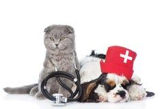 Котенок с стетоскопом на его щенке Spaniel шеи и кокерспаниеля изолировано Стоковые Фото