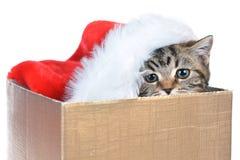 Котенок с шляпой Санта Клауса Стоковое Фото