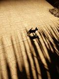 Котенок тени стоковые изображения