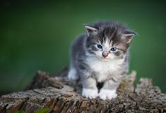 котенок травы младенца Стоковые Фото