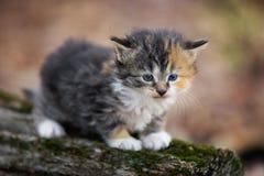 котенок травы младенца Стоковое Изображение RF