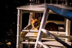 Котенок улицы пряча среди стульев Стоковое Изображение