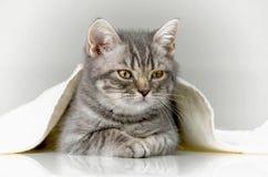 котенок, утеха в доме Стоковые Изображения