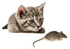 Котенок улавливая мышь стоковые изображения rf