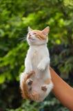 Котенок улицы руки поднимаясь Стоковые Фото
