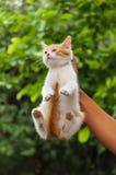 Котенок улицы руки поднимаясь Стоковое фото RF