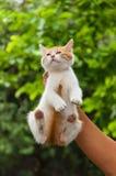 Котенок улицы руки поднимаясь Стоковое Изображение RF