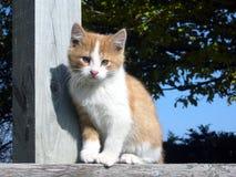 котенок фермы Стоковое Изображение