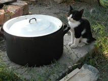 Котенок хочет съесть Стоковое Изображение RF