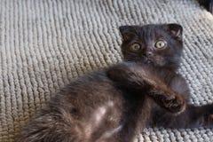 Котенок черного кота Стоковые Фото