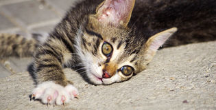 котенок шаловливый Стоковые Изображения RF