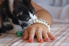 котенок шаловливый Стоковая Фотография