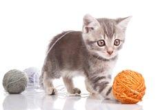 котенок шаловливый Стоковое фото RF