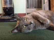 котенок шаловливый Стоковое Фото