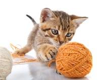 котенок шаловливый Стоковые Фото