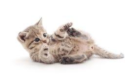 котенок шаловливый Стоковое Изображение RF
