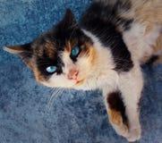 котенок шаловливый Стоковые Фотографии RF
