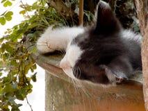 Котенок любимчика Стоковые Фото