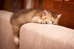 Котенок Юта ¡ Ð великобританский спать на кресле стоковая фотография rf