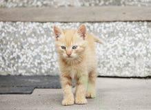 Котенок Стоковые Изображения