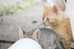 Котенок Стоковое Изображение RF