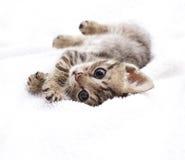 Котенок Стоковое Изображение
