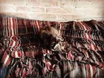 Котенок Стоковые Изображения RF