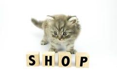 Котенок Стоковая Фотография RF