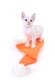 котенок cristmas крышки Стоковые Фотографии RF