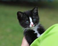 Котенок Cub Стоковые Изображения