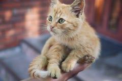 Котенок III Стоковое Изображение