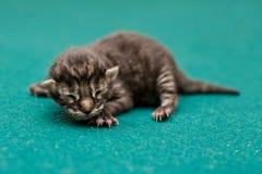 котенок newborn стоковое фото rf