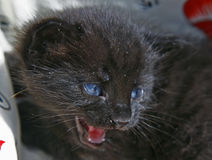 котенок newborn Стоковое Изображение