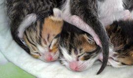котенок newborn Стоковые Изображения