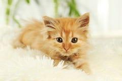 Котенок Redhead на белой шотландке Стоковая Фотография RF
