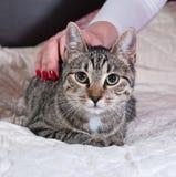 Котенок Tabby лежа на кровати стоковая фотография