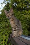 Котенок Tabby на загородке Стоковое Изображение